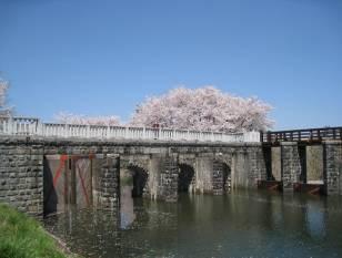 新潟県健康ウォーキングロード 長堤十里 加治川桜みち/健康にいがた21